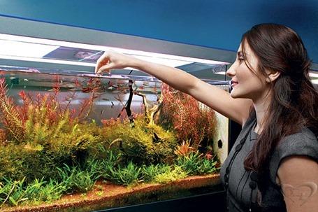 Фэн-шуй дома и офиса: аквариум в интерьере