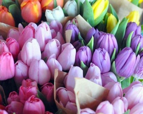 Покупка тюльпанов оптом