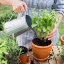 Что поможет вашему саду цвести и плодоносить